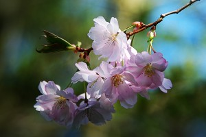 spring-flower-289844_960_720
